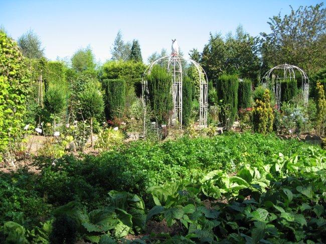 Le jardin de légumes anciens.